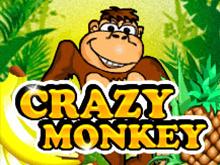 Играть на игровых аппаратах Crazy Monkey